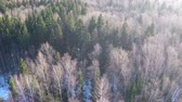 csupasz : Aerial winter shot of mixed forest with bare birches and coniferous trees in bright sunlight Stock mozgókép