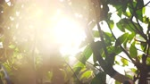 pulverizador : Wet tree branches and green leaves in the sun light with specks Stock Footage