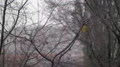 csupasz : Slow motion shot of light snow falling in the city. Late autumn scene with wet bare trees having last leaves left