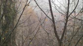 페이드 : Bare trees under snow with rain in late autumn. Dull scene with bad weather