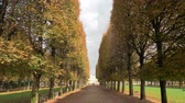 gezinmek : Steadicam shot of strolling on promenade lined with high trees. Walking in Luxembourg Gardens towards the Palace. Scene in autumn
