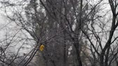 utolsó : Faded bare tree with last yellow leaf left under snowfall. Dull scene of late autumn