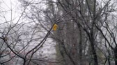 final : Slow motion shot of autumn snowfall, view to the faded bare tree with last dry yellow leaves Vídeos