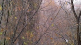 페이드 : Slow motion shot of autumn snowfall on the background of faded trees with few dry leaves