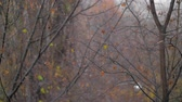 厄介な : Slow motion shot of autumn snow falling in the park with bare trees