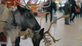 galhada : Creating Christmas holidays atmosphere at the airport with Santa Claus and his reindeer