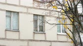 住居 : Windows of the apartment block and tree with few yellow leaves. Autumn in the city, Russia 動画素材