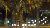 rozmazané : Night view of the city with moving defocused lights of transport, tree branches in foreground. Dostupné videozáznamy
