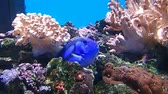 vadon : Blue fish between rocks