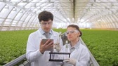 produtos químicos : In the greenhouse, two experts look at the test tubes with greens.