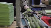 przetwory : Workers on line of packing fresh cucumbers automatic line in trays inside factory. Wideo