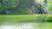 klimplant : dry tree in water and green plants all around lake and wave on water surface