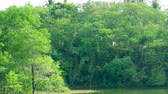 à beira do lago : light green leaves on tree is swing and dark green tree background in lake