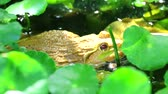 жаба : Frog live away from the sun in shade of trees and relax in water