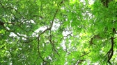 under fresh green leaves of tree in the garden