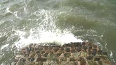 crustacean : wave surge with stone stair on sea in storm season