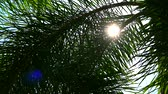 tabule : Sunshine back silhouette palm leaves with sun in the garden