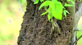 eroze : Termites build a nest on a tree after rain, vertical foot to top1