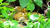 жаба : Frogs live away from the sun in the shade of trees and are active at night
