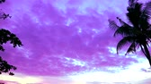 imagine : pan vertical silhouette coconut sunset on sea and purple cloud on the sky
