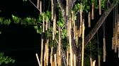 vento : bamboo were hang on tree and swing by wind in night garden