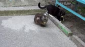 abandoned alley : two cats near the entrance of a house. Stock Footage