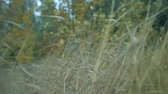 cana : long grass in a forest dry