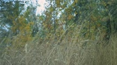 wind gust : long grass in a forest dry