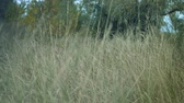 houpavý : long grass in a forest dry