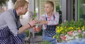 flora : Young woman in apron giving male coworker to smell flowers while working outside of flower shop and taking care of flowers.