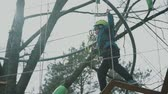 overcome : young boy passing the cable route high among trees, extreme sport in adventure park Stock Footage
