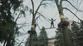 competere : young boy passing the cable route high among trees, extreme sport in adventure park Filmati Stock