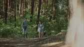 晴れた : A young attractive couple walking through the forest with their happy dog.Couple in love play with the dog shiba in pine forest .Sunny weather.