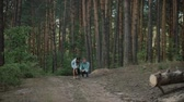shiba : A young attractive couple walking through the forest with their happy dog.The girl and the guy call their dog.Couple in love play with the dog shiba in pine forest .Sunny weather.