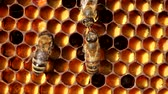 originality : Bees share information, pass each other nectar. A good and original story.