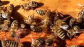 originality : Bees gather at the top of open hive.