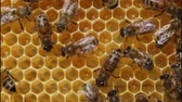 originality : Bees build honeycombs. In cells placed nectar , honey and pollen.