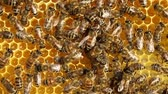 cera de abelha : Bees convert nectar into honey and close it in the honeycomb
