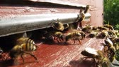originality : Bees convert nectar into honey and close it in the honeycomb