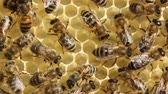 originality : Bees build honeycombs Stock Footage