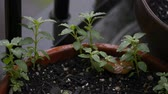 garnek : Small plants in a pot getting hit by raindrops Wideo