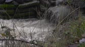 наводнение : Close up of water surging out of a pipe into a roadside drainage ditch Стоковые видеозаписи