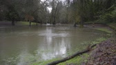 наводнение : Hess Creek flooding in Herbert Hoover park in December 2015 at Herbert Hoover Park in Newberg, Oregon.