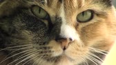 kürk : Tight close up on a cats face as her eyes look around