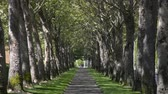 árnyék : A sidewalk lined on both sides with trees in the summer. people jogging in the distance.
