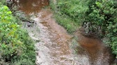 Top view of creek flowing in day time in woods Dostupné videozáznamy