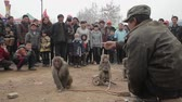 トレーナー : Xianyang,China-Feb 26 2012,street performers monkeys. This is a traditional Chinese folk entertainment