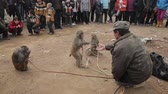 opice : Xianyang,China-Feb 26 2012,street performers monkeys. This is a traditional Chinese folk entertainment