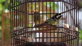 Caged bird flapping around in wooden cage for sale on  Street