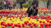 XIAN CHINA- APR 15 2012: Man take a photo for tulip in park